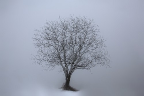 ghost tree (1200pxl)